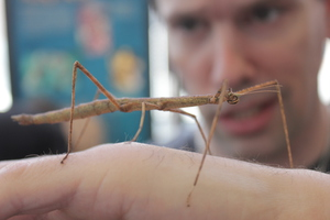 Tazz and Stick Insect